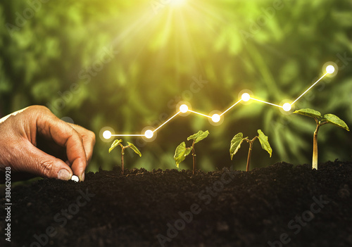 Fototapeta Hand planting seedling growing step in garden with sunshine. Concept of business growth, profit, development and success.	 obraz