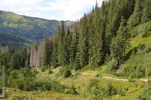 Fototapeta Dolina Jarząbka, Tatry Zachodnie, szlak turystyczny obraz