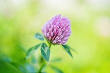 Small Wild Flower Round Purple