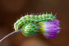 Macro Shots, Beautiful Nature ...