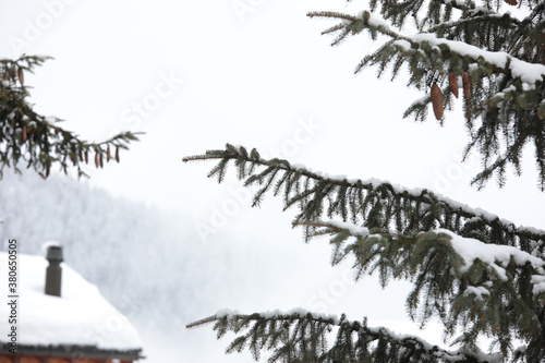 Fotografie, Obraz Closeup shot of snow-covered spruce branches with a house rood on the background