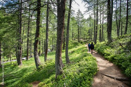 Tablou Canvas Sentiero all'Alpe Devero