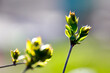 canvas print picture - The world of flowering plants