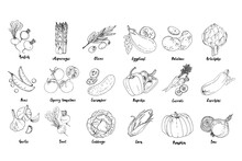 Set Of Drawn Colored Vegetables. Fresh Harvest. Farm Products. Pumpkin, Asparagus, Olives, Peas, Cherry Tomatoes, Cucumber, Garlic, Beets, Cabbage, Eggplant, Potatoes, Artichokes, Peppers, Carrots