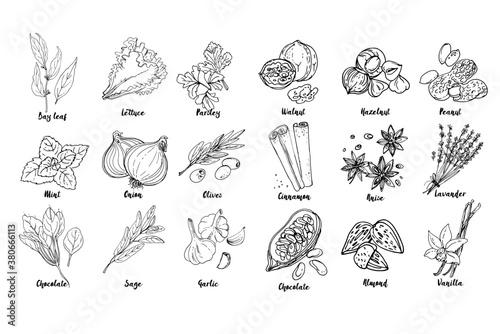 Herbs Fototapete