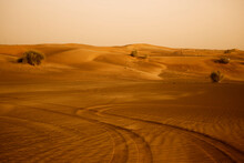 Warm Landscape View Of Dubai Desert Safari With Tracks From Quad Buggy Transport And Plants