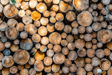 Stapled Woodpile In The German...
