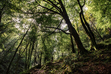 Forest Landscape Of Glades And...