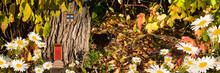 A Magical, Fairy-tale Forest With A House For A Dwarf In The Trunk Of A Tree. A Black Cat Peeks Out From Behind A Tree Trunk. Fantastic Natural Autumn Background, Collage. Selective Focus, Panorama