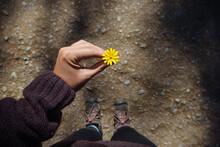 Holding A Wild Flower She Foun...
