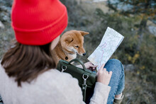 Young Woman With Dog Looking At The Map