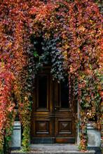 Door Full Of Autumn Leaves