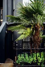 London Palm Tree