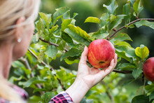 Woman Picking Red Apple