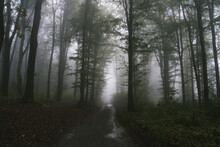 Path Through Mysterious Dark F...