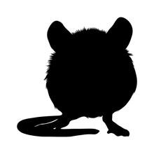 Standing Mouse (Apodemus Sylva...