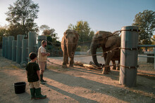 Feeding The Elephants On The Zoo