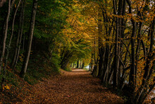 Forest Hike Path