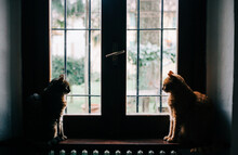 Cats At The Window While It's ...