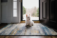 Cute White Dog Sitting In Fron...