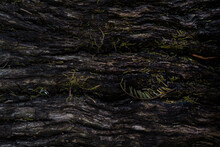 Texture Of Tree Bark In A Dark...