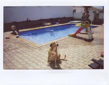 Children Playing At Swimming P...