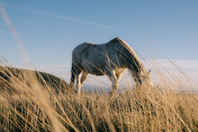 Out Of Focus Horse With Dried ...