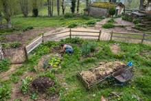 Woman Is Planting Seedlings In Vegetable Garden