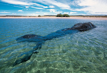 Beached Whale Decomposing In Shallow Waters