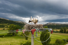 Five Storks Standing In Their Nest On A Stormy Day