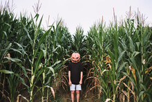 Child Wearing Jack O Lantern Standing Amidst Corn Field During Halloween Celebration