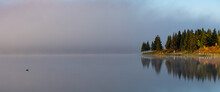 Duck On Calm Lake In Morning With Fog And Trees In Background