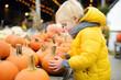 Little boy choose right pumpkin on a farm at autumn. Preschooler child hold a orange pumpkin.