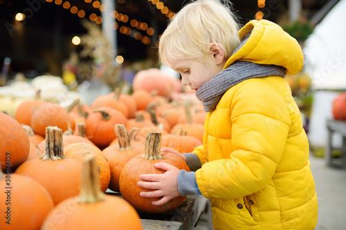 Fototapeta Little boy choose right pumpkin on a farm at autumn. Preschooler child hold a orange pumpkin. obraz