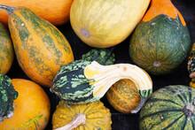Ornamental Squash Fruits