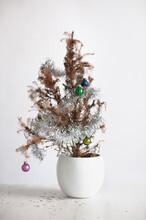 Miniature Dead Christmas Tree