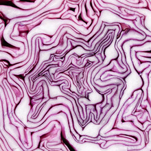 Abstract Red Cabbage Background