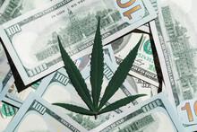 Marijuana Leaves On US Dollar Bills.