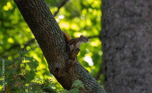 little squirrel Fototapete