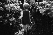 A Black And White Of A Little Girl Running In-between Rose Bushes.