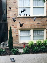 Pigeon Party.