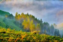 Dumesti, Alba County, Romania ...