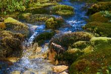 Clean Mountain Stream Originat...