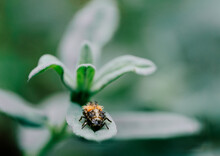 Jumping Insect On A Flower