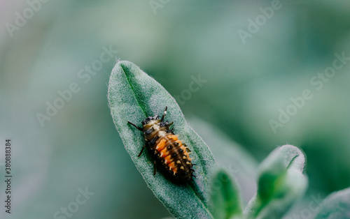 insect on leaf Canvas Print