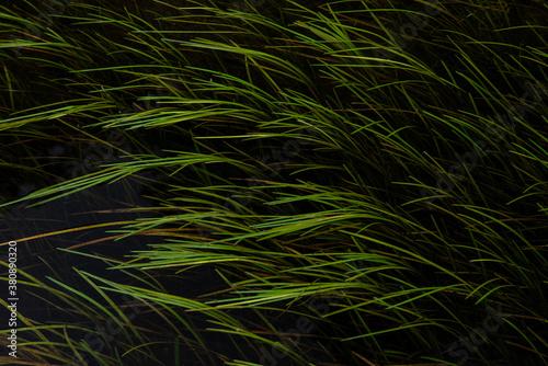 Wonderful abstract landscape image of vibrant and lush green plants underwater w Billede på lærred