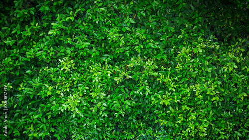 Photo Green nature wall  textured background