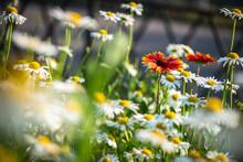 Nice Summer Field Flowers Unde...