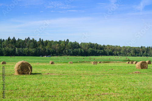 green field with haystacks under blue clear sky in sunny weather in russian coun Wallpaper Mural
