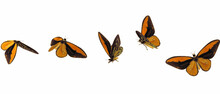 Set Of Monarch Butterflies